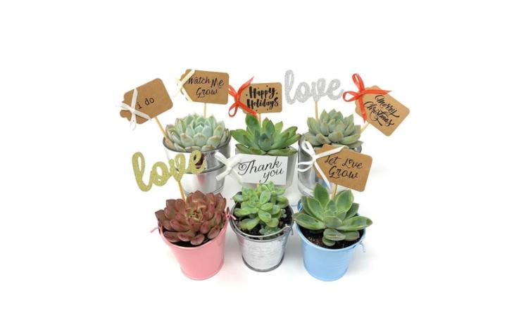 tag succulents