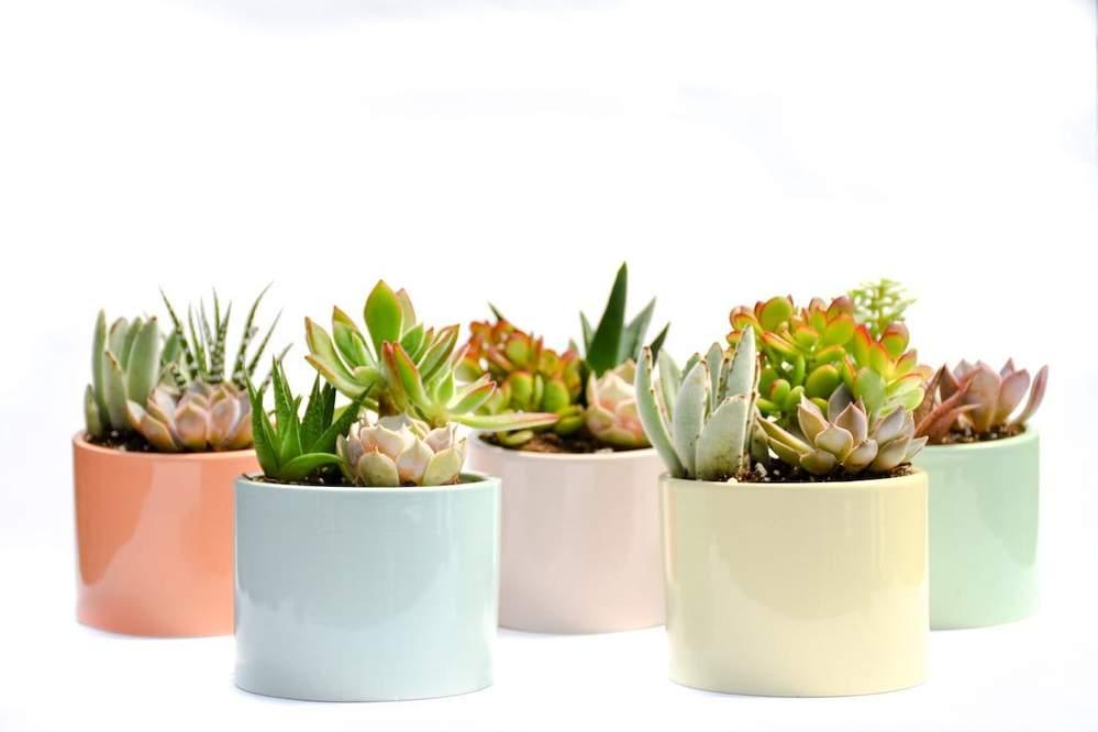 the summer garden collection