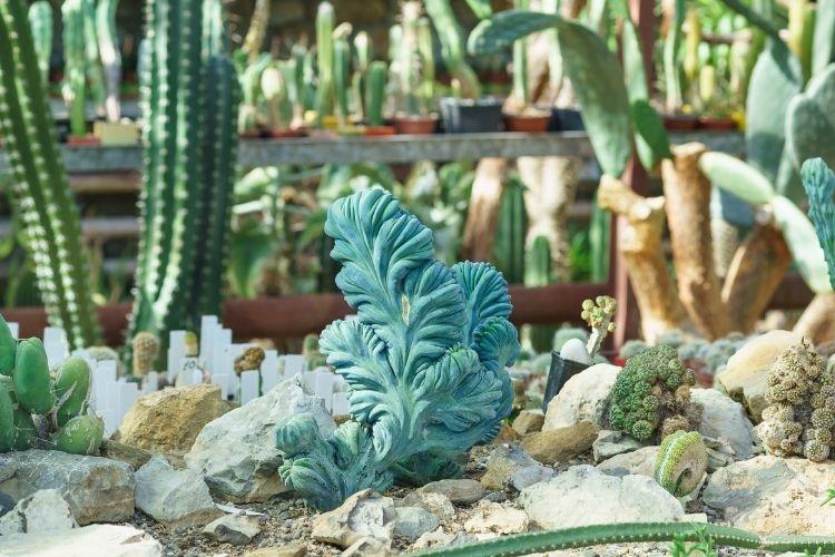Dinosaur Back Plant