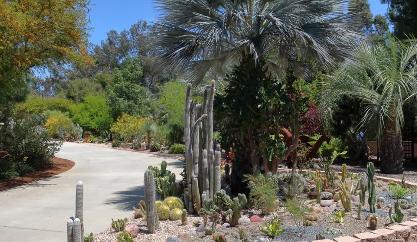 cactii in garden